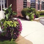 images-Seasonal Color-flowers_11.jpg