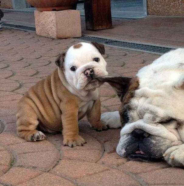 В каком возрасте брать щенка