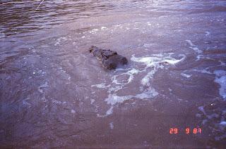 6000Adelaide River Croc Tour