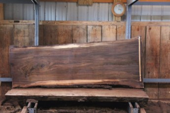 "552  Walnut -7 10/4 x  39"" x  31"" Wide x 8'  Long"