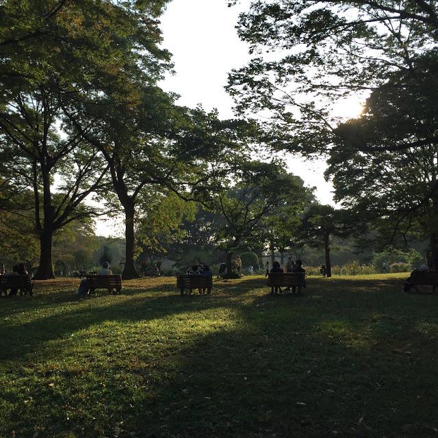 Sunset in Yoyogi Park