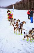 Iditarod2015_0451.JPG