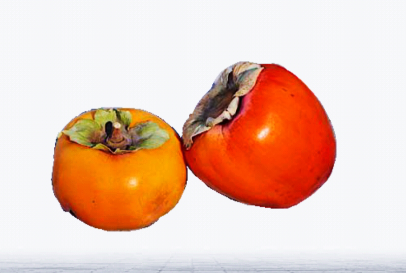 indian persimmon tendu benefit for health by plantsbhh
