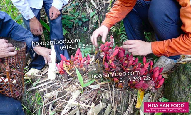 Khai thác Nấm Ngọc Cẩu tươi | HOA BAN FOOD™