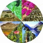 Система органического мира Земли