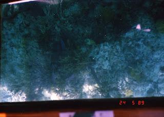 0950Under-Water Sightseeing