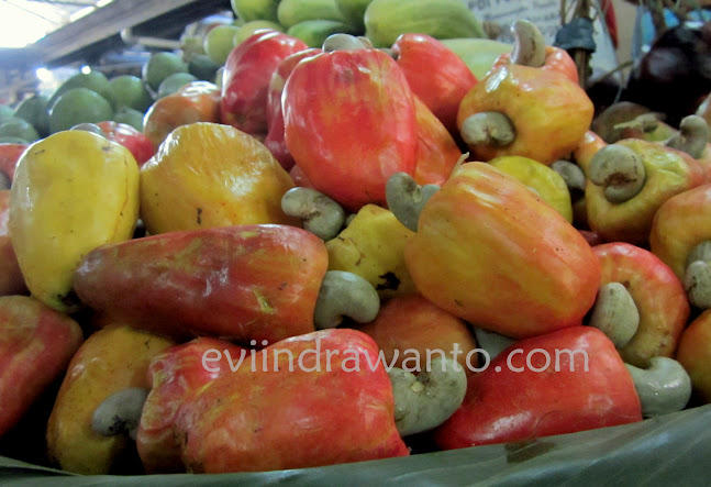 Gambar jambu monyet, jambu mete, asal kacang mete