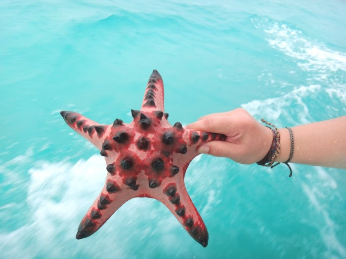 Spiky starfish from near Sand Island, Belitung