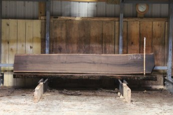 "596  Walnut -2 8/4 x 19"" x 17"" Wide x  10'  Long"