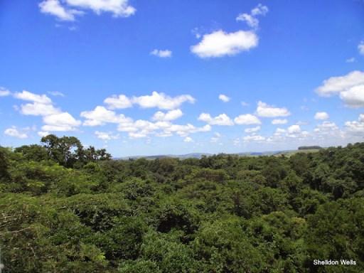 Dlinza Forest Canopy, KwaZulu-Natal, South Africa
