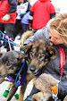 Iditarod2015_0089.JPG