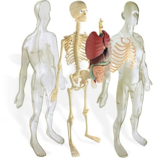 kit-cuerpo-humano-juguete-regalo-niños-7-años-ideas