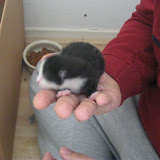 katten - 2011-02-26%2B12-09-04%2B-%2BIMG_0252.JPG