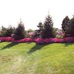 images-Seasonal Color-flowers_10.jpg