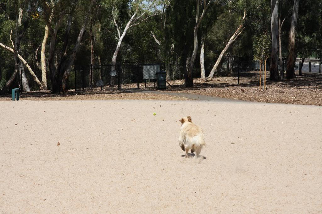 2070At Pooch Park