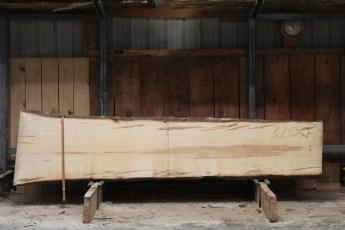 "602  Ambrosia Maple - 2 8/4x 28"" x 22"" Wide x  10'  Long"