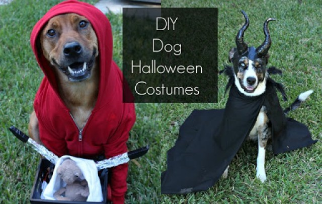 DIY Dog Halloween Costumes Domesticability