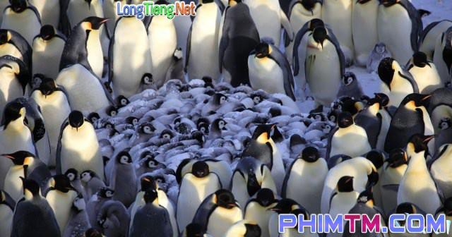 Xem Phim Cuộc Sống Chim Cánh Cụt Bắc Cực - Penguins: Spy In The Huddle - phimtm.com - Ảnh 3