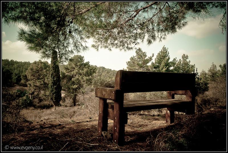 Одно фото / Лес Цора, скамейка для романтиков