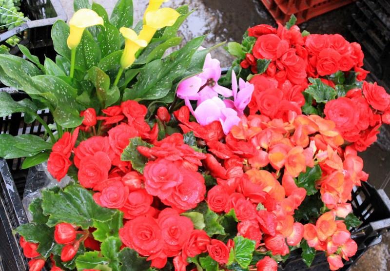 Da Lat produces maximum amount of Vietnam's fruits, flowers and vegetables