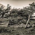 Advanced 3rd - Windswept Trees_Richard Wilson.jpg