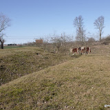 Westhoek Maart 2011 - 2011-03-19%2B15-07-30%2B-%2BDSCF2061.JPG