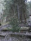 Romantisch: Weihnachtsbaum an der Heilquelle