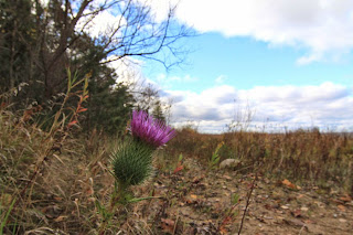 deepwater point thistle1