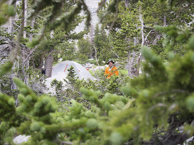 The perfect campsite in the Cirque! Sheltered from the wind among these trees.