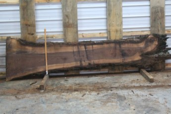 Walnut 213-8  Length 11' Max Width (inches) 31 Min Width (inches) 9 Notes 8/4 Kiln Dried