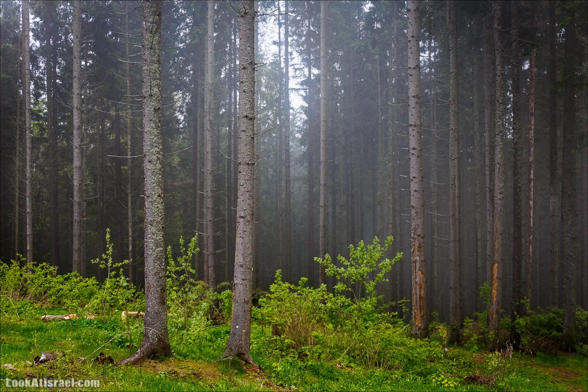 Туман в лесу Карпатских гор