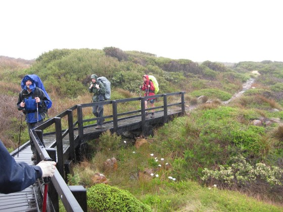 Bridge over the boggy gully along the top of the cliffs south of Quininup Beach, Cape to Cape Track