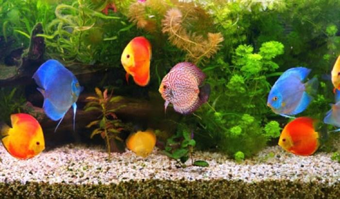 Vizhinjam-Marine-Aquarium
