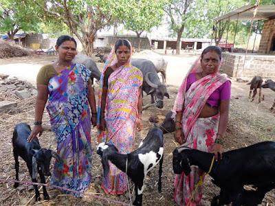 Telugu Agriculture News-Maharashtra Women Making History With Goat Milk Soaps