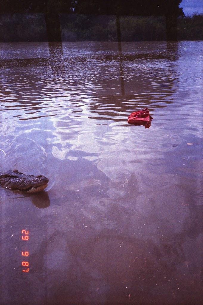 6020Adelaide River Croc Tour