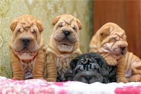 Как выбрать щенка из помета