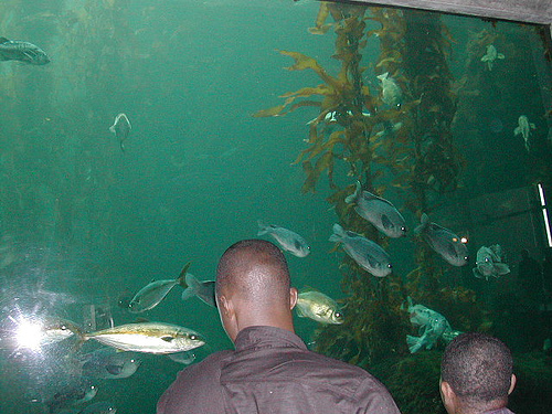 Montery Bay Aquarium, USA - 207779484_292821419b.jpg