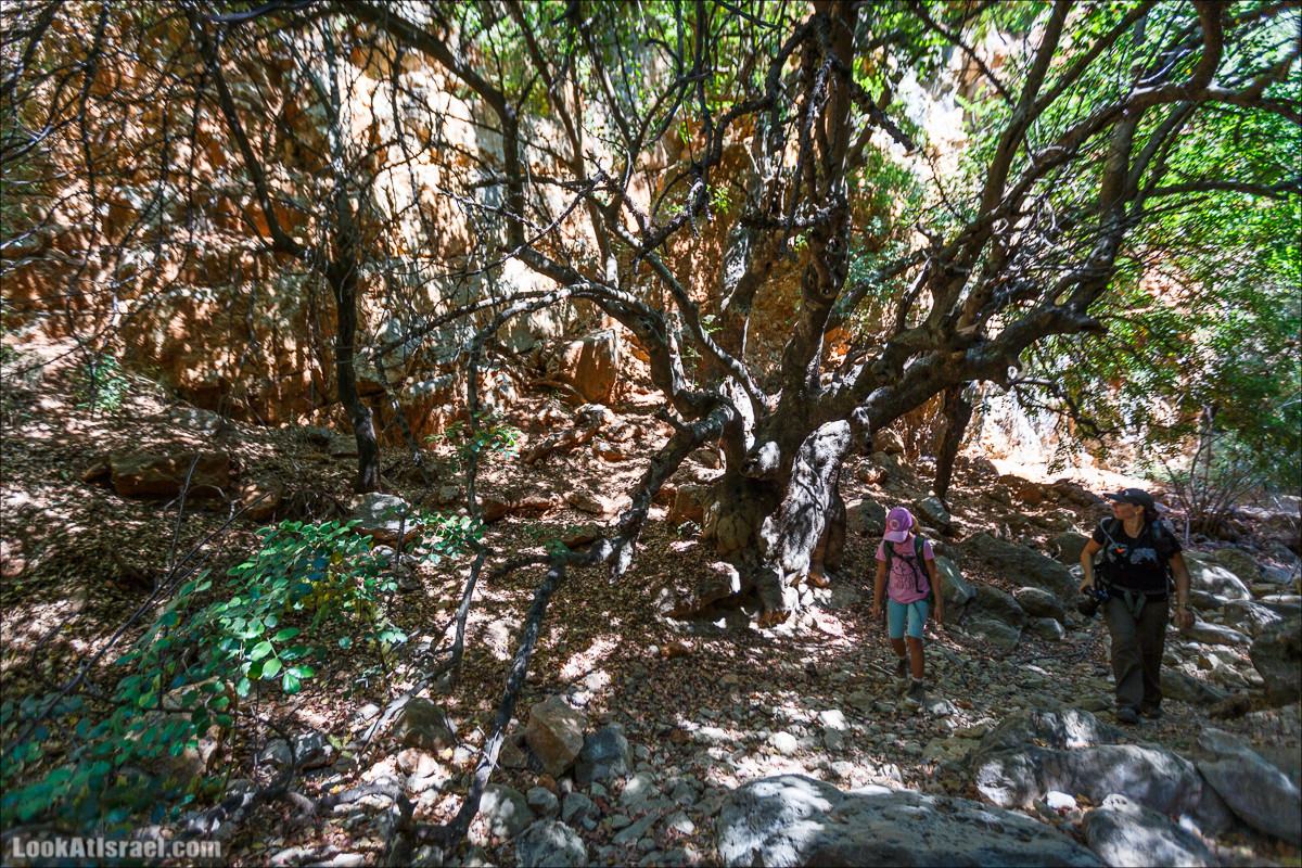 Нахаль (ручей) Говта | Nahal Govta | נחל גובתה | LookAtIsrael.com - Фото путешествия по Израилю