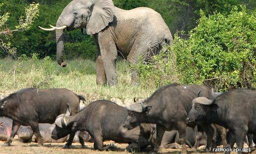 """Résultat de recherche d'images pour """"braconniers Congo parc des Virunga"""""""