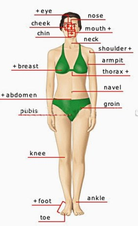 MANM BODY WOMAN ANTERIOR VIEW