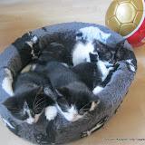 katten - 2011-04-12%2B17-22-40%2B-%2BIMG_0397.JPG