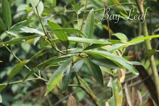 Bay Leaf1