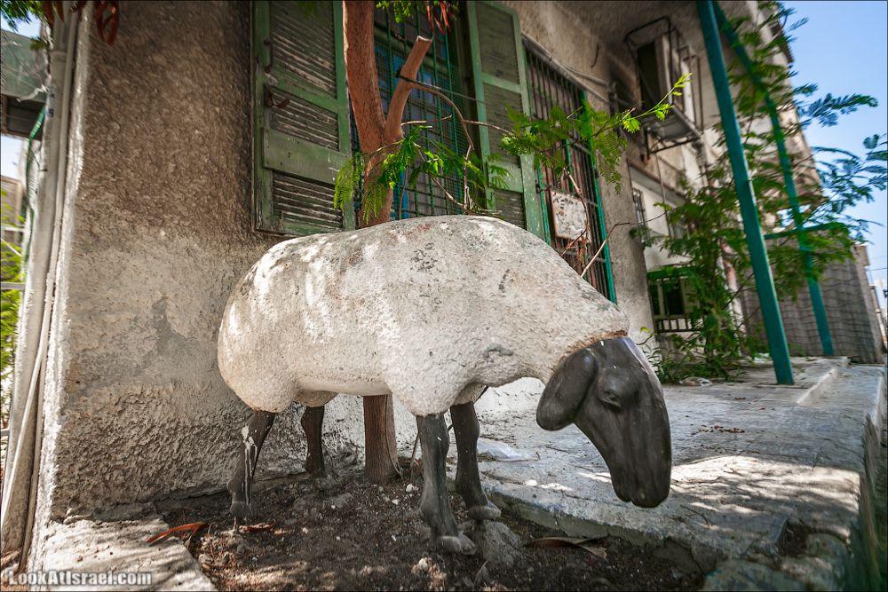 Овца ты тель авивская