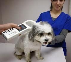 чип для собак