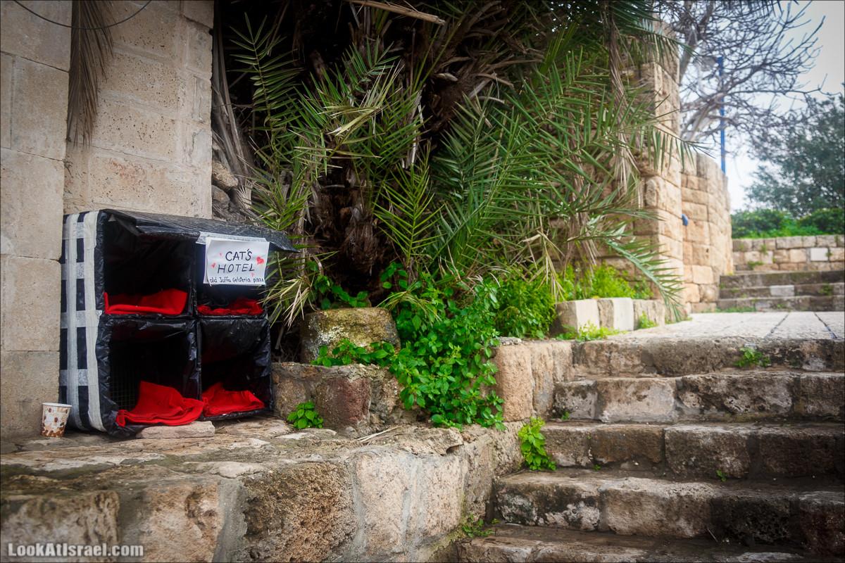 Крошки Тель-Авива 14. Жилищно-бытовые
