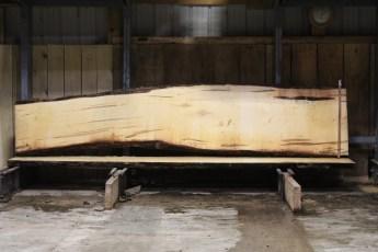 "599  Ambrosia Maple -5 10/4x 30"" x 21"" Wide x  12'  Long"
