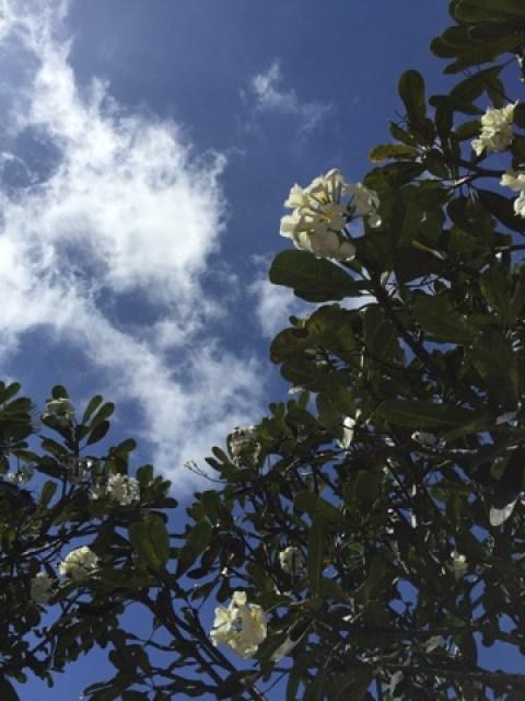バリ島 フランジパニ