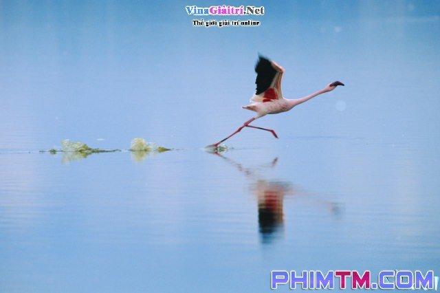 Xem Phim Bí Mật Của Chim Hồng Hạc - The Crimson Wing: Mystery Of The Flamingos - phimtm.com - Ảnh 3