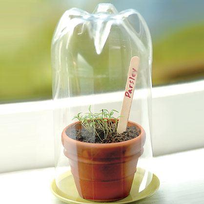 Idea para proteger las plantas.