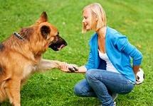 Как правильно хвалить собаку